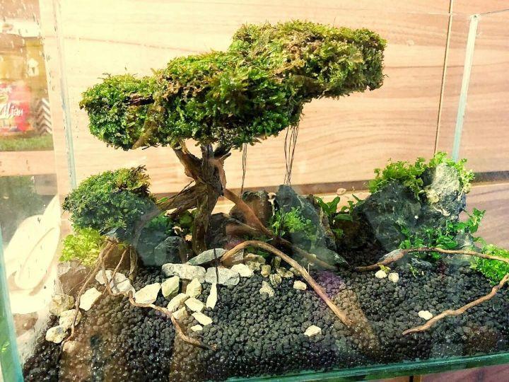 nano bonsai aquascape