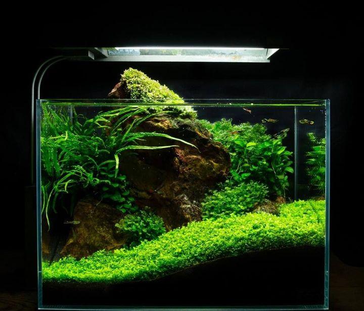 nano tank aquascape