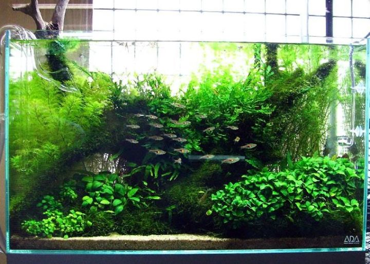 planted aquarium nature style