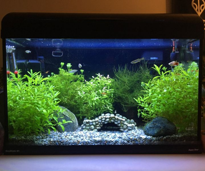 planted aquarium no fish