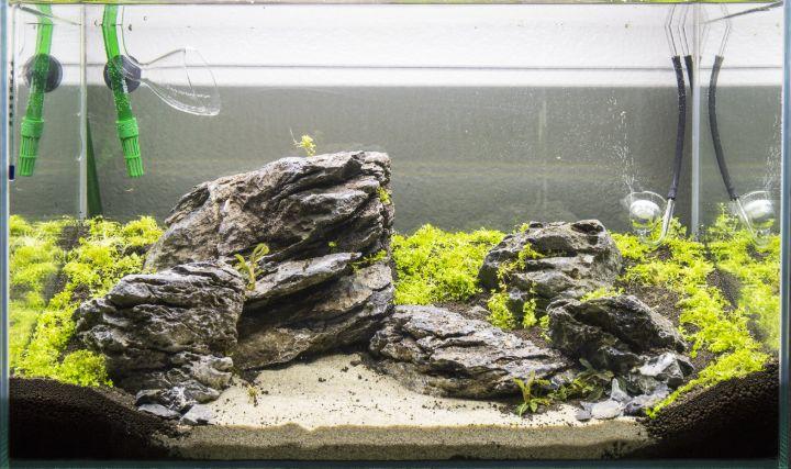 seiryu stone mini aquascaping