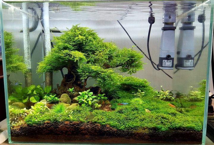 small bonsai driftwood aquascaping