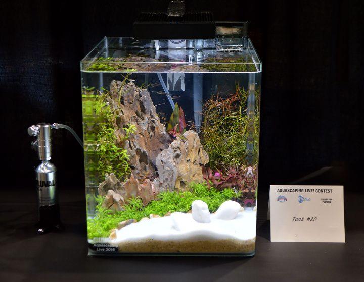 small tank aquascape idea
