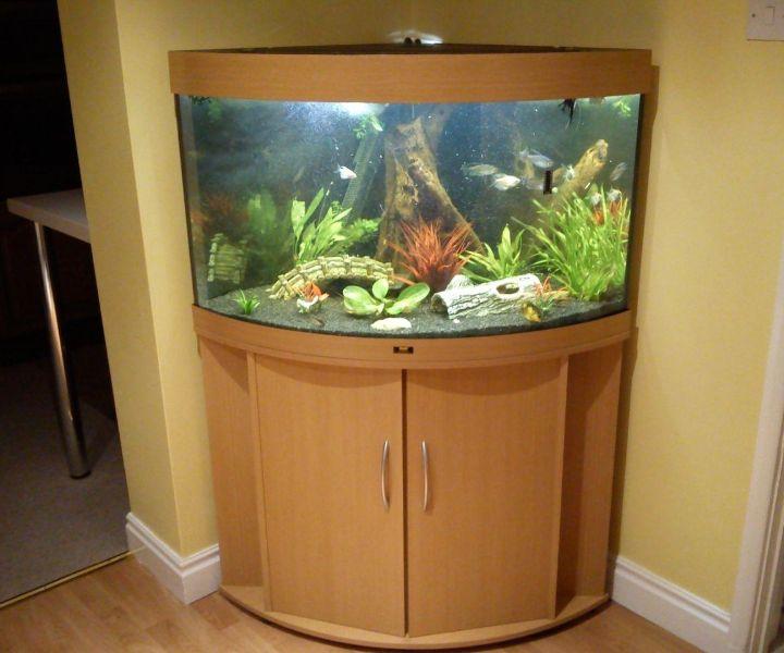 corner fish aquarium