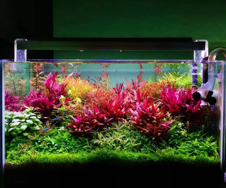 dutch planted aquarium