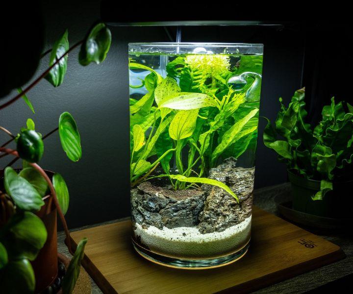 fish jarrarium