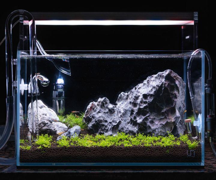 iwagumi planted aquarium