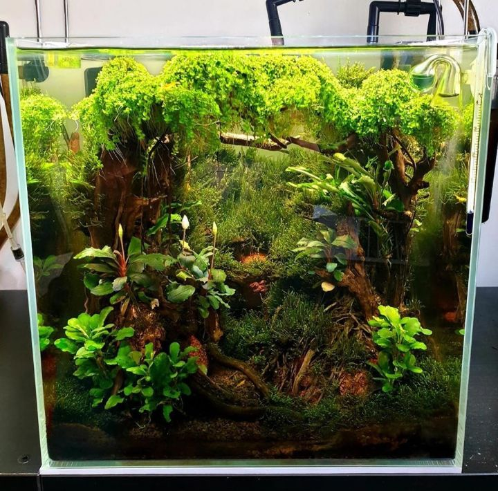 jungle planted aquarium