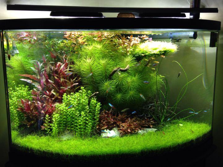 planted aquarium image