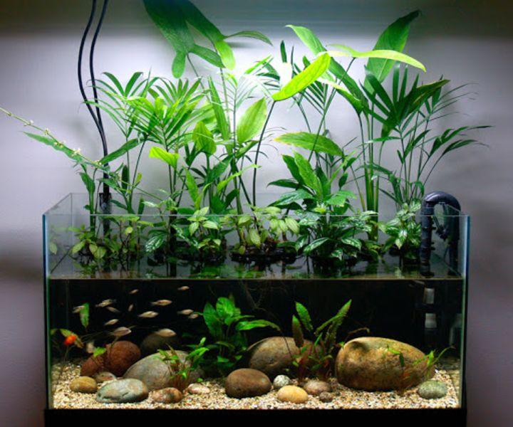 planted fish aquarium