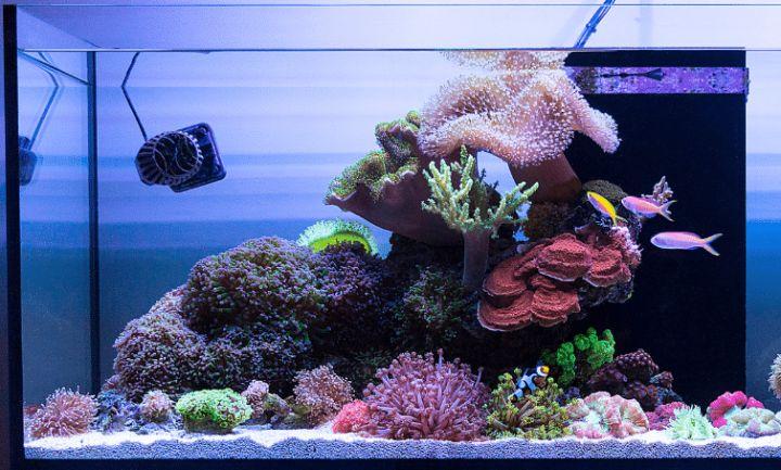 saltwater planted aquarium