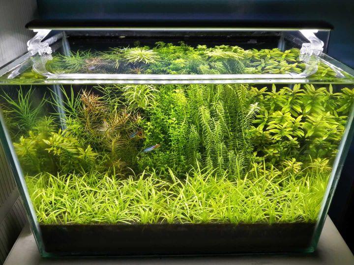 taiwanese planted aquarium