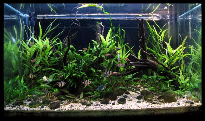 thailand biotope planted aquarium