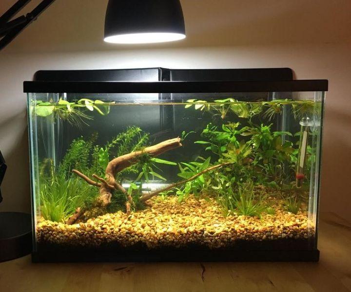 walstad planted aquarium