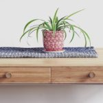 spider plant guide