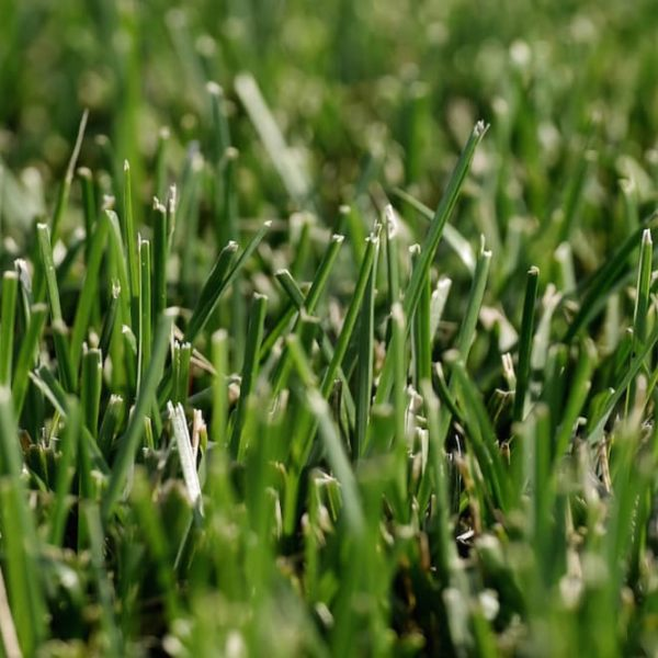 types of grasses lawn garden