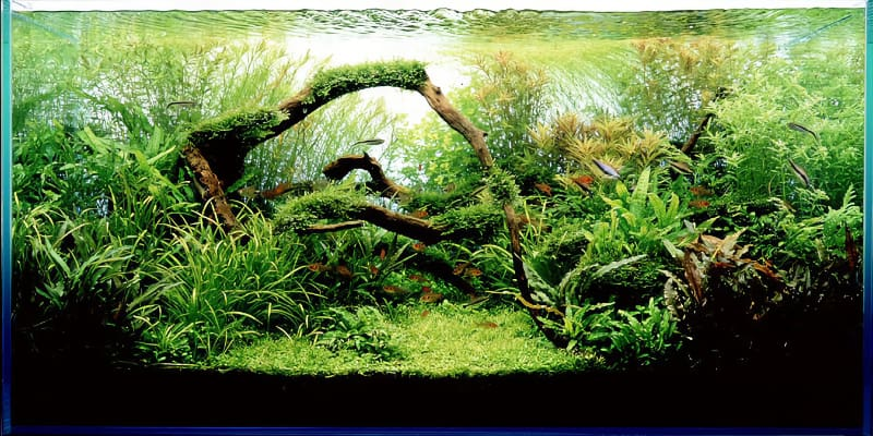 what is aquascaping examples