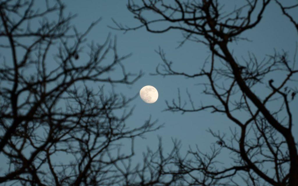 full moon tree gardens