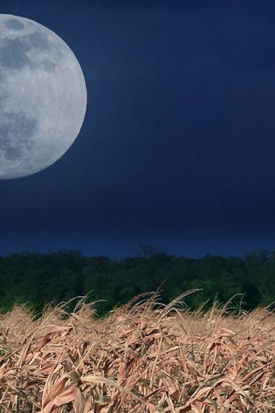 moon gardening light